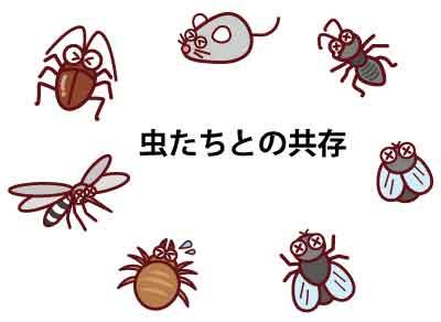 パラオの虫たちと共存